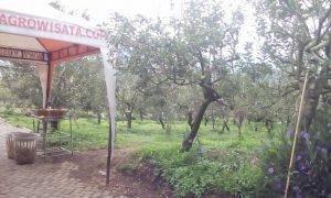 Kusuma Agro Wisata